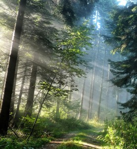 6769899-amazing-forest-path